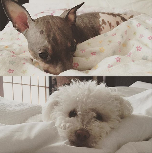 Everyone Can Snuggle Up At Pet Friendly Hotel Kabuki In San Francisco S Antown