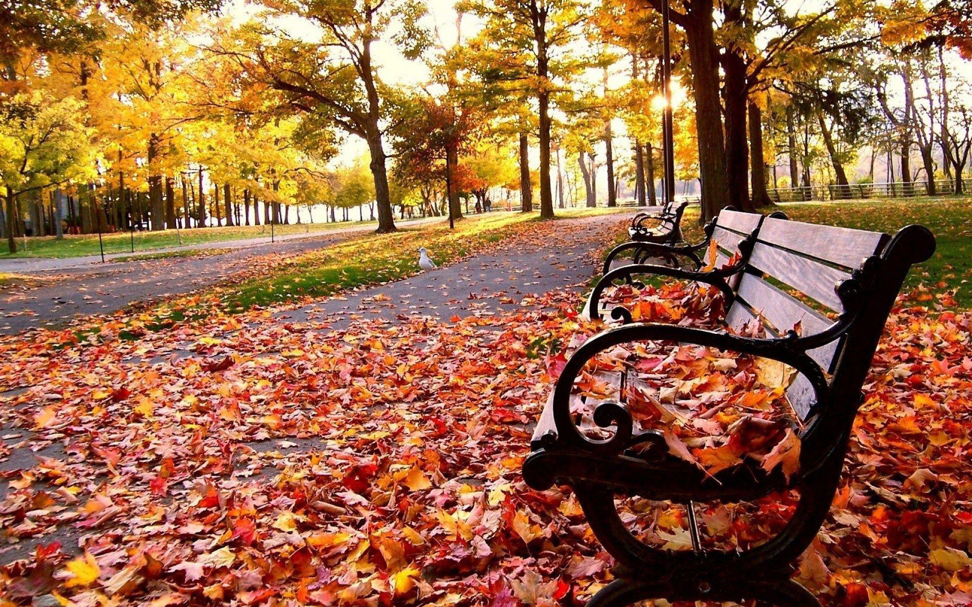 Autumn Tumblr Wallpaper Hd 1py 1920x1200 Px 1 12 Mb Nature