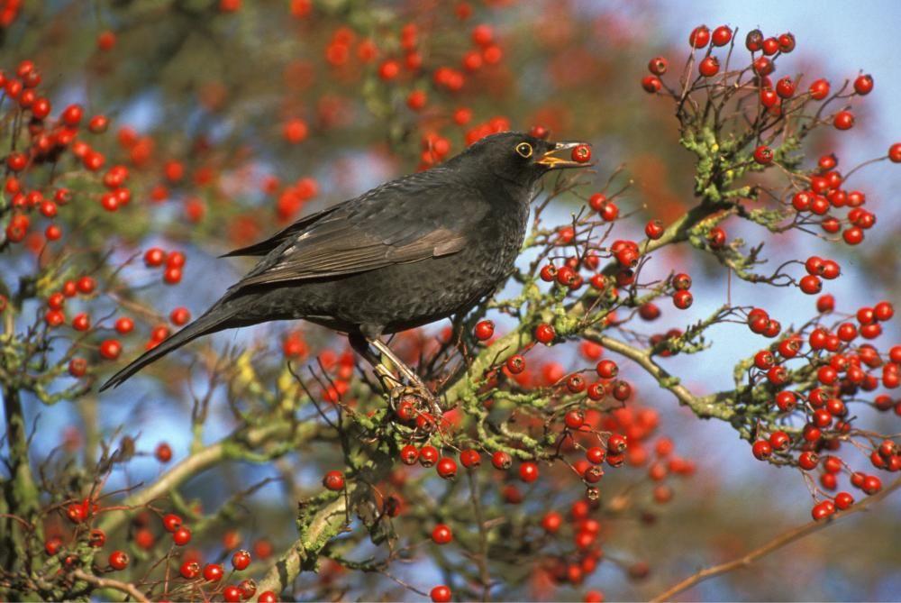 Eine Hecke Fur Den Vogelschutz Hecke Pflanzen Schattenpflanzen Vogel Im Garten