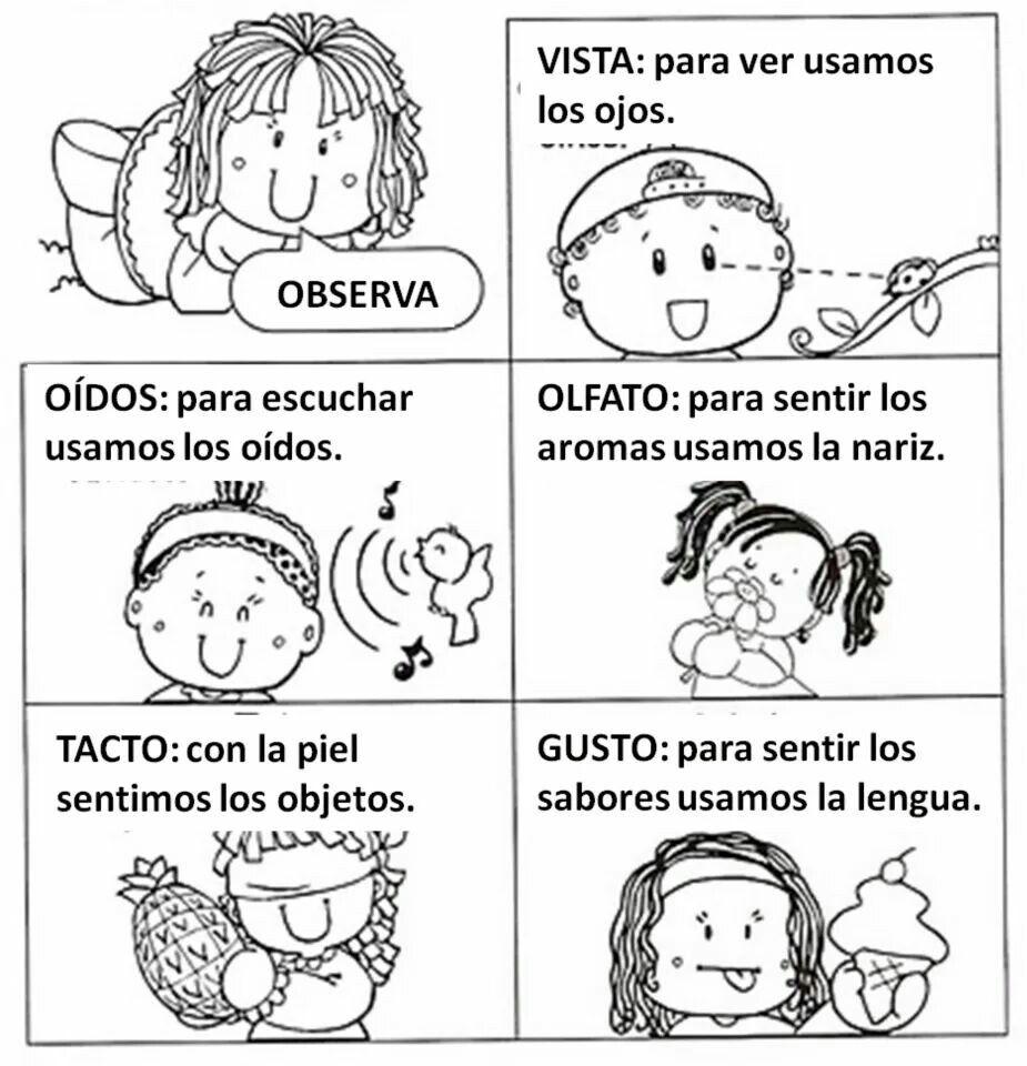 Los cincos sentidos | LOS CINCO SENTIDOS | Pinterest | Partes del ...