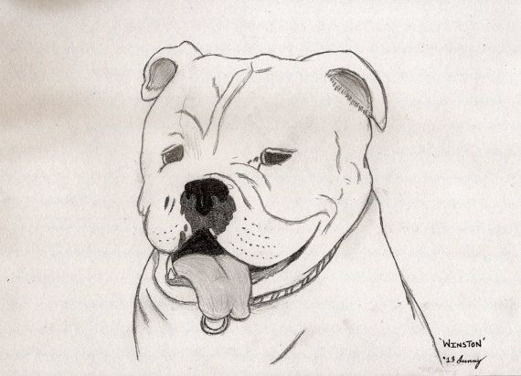 Custom Hand-Sketched Pet Portraits by Sunny by MidgeAndTilly