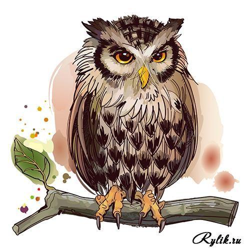 Нарисованные фрукты с брызгами краски, птицы - векторный ...