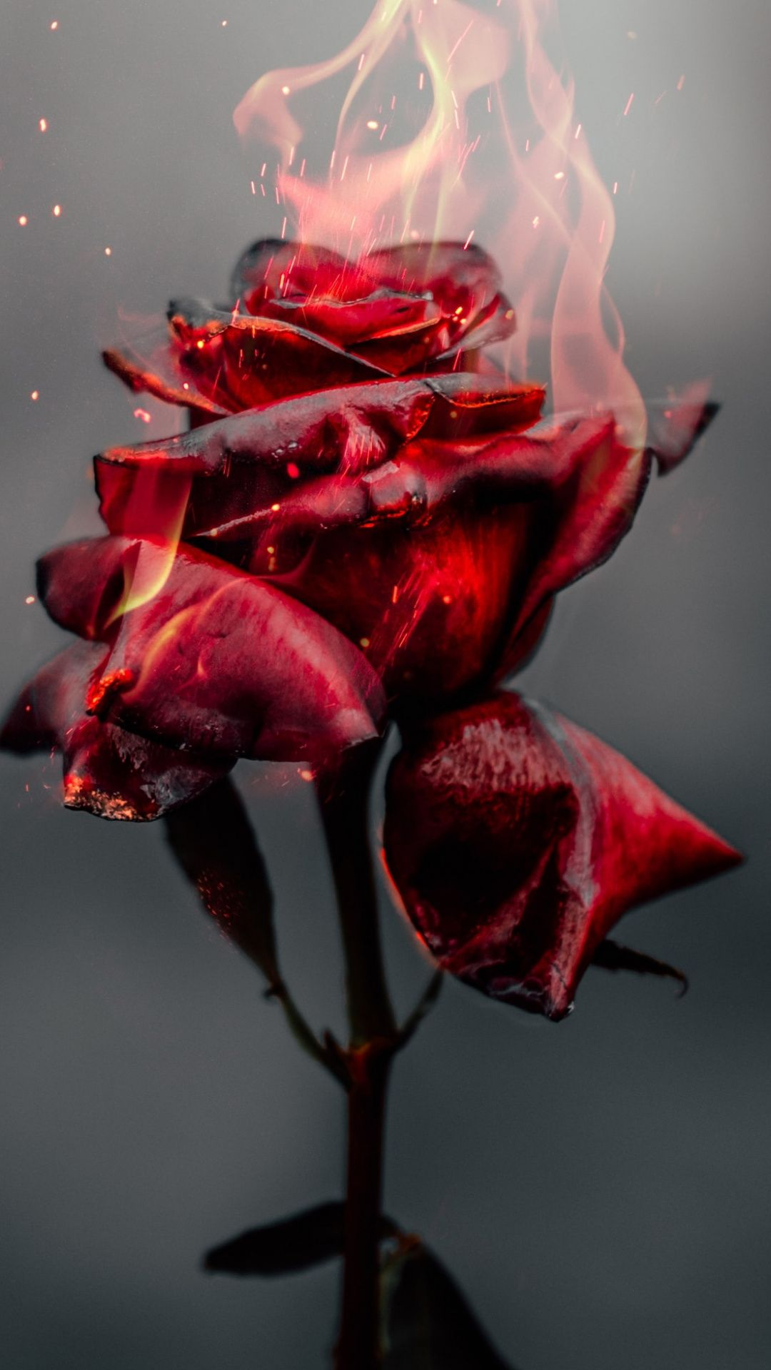 1080x1920 Burning Rose Fire Red Flower Wallpaper Red Flower Wallpaper Red Roses Wallpaper Red Wallpaper