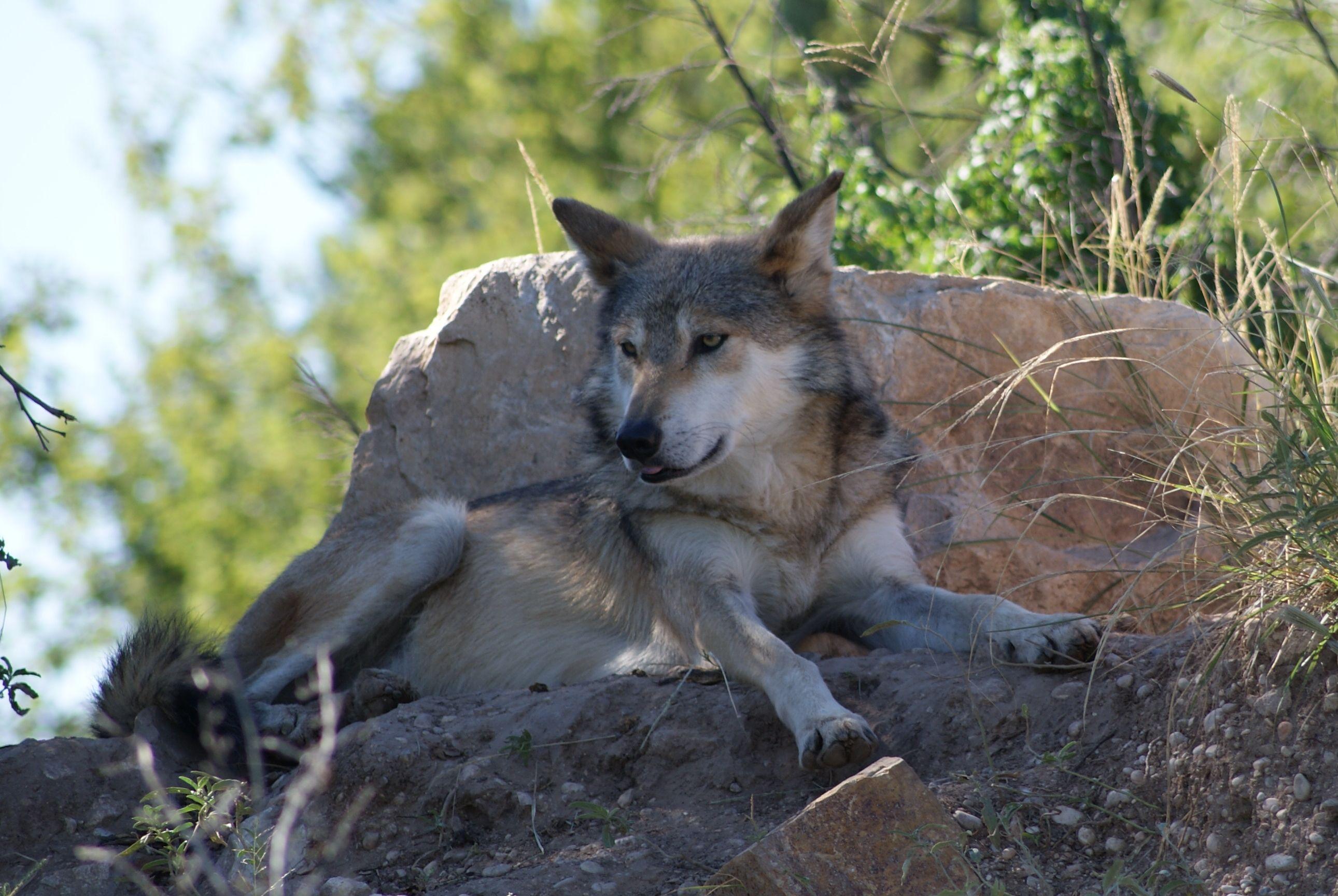 b711e615e92aacd808303e5a1b366388 - Living Desert Zoo And Gardens State Park New Mexico