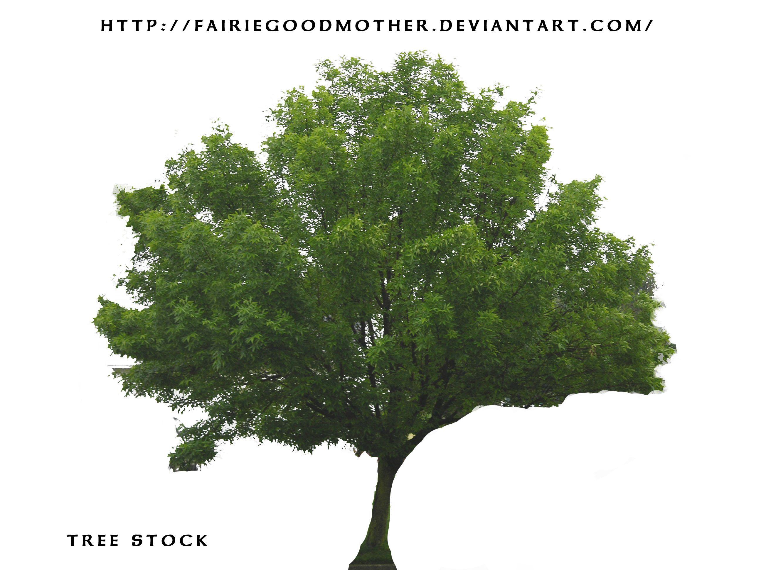 tree Stock psd