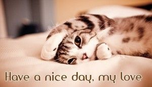 75 Have A Great Day Memes Quotes Images Texts Kittens Cutest Cats Cute Animals