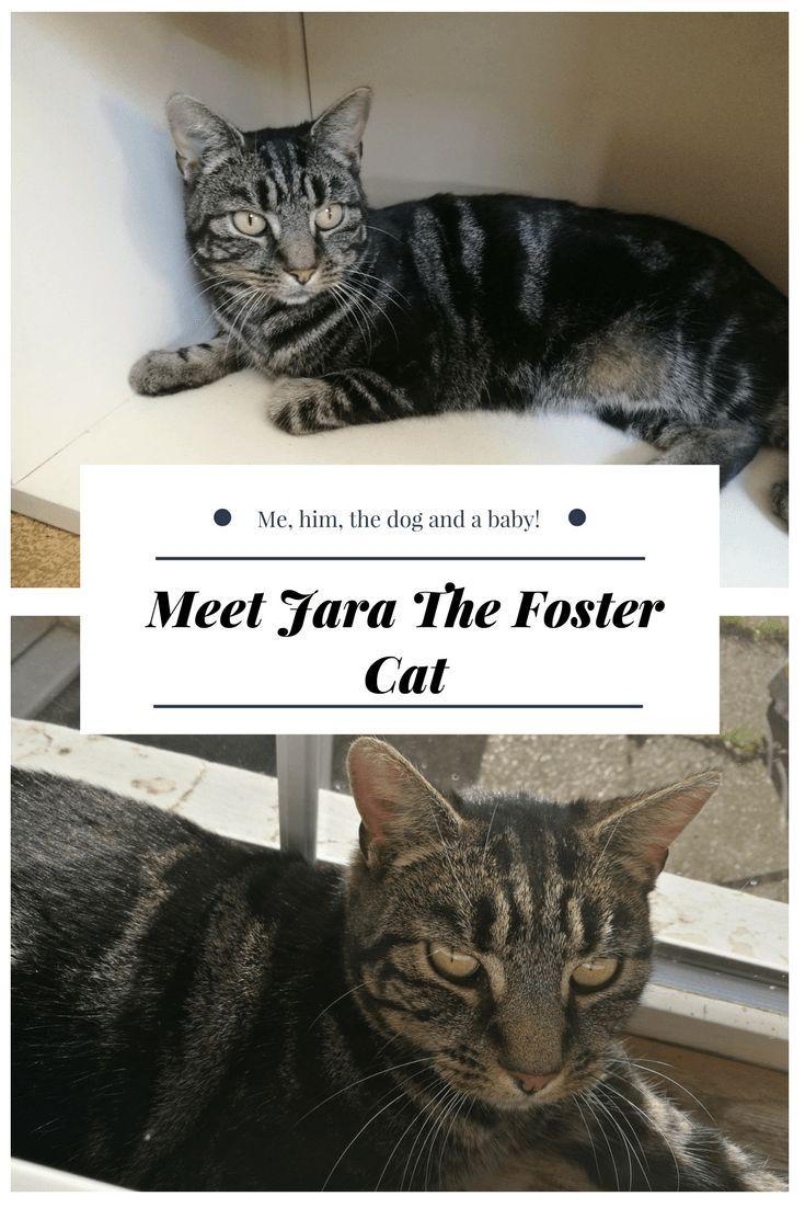 Meet Jara The Foster Cat Me, him, the dog and a baby! in
