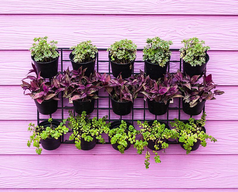 Destacar objectos? Pinte a parede de fundo com uma cor que faça contraste.  #Cor #Pintar #Contraste #Destacar