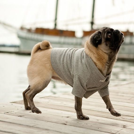 Pug or small dog ready made hoodie