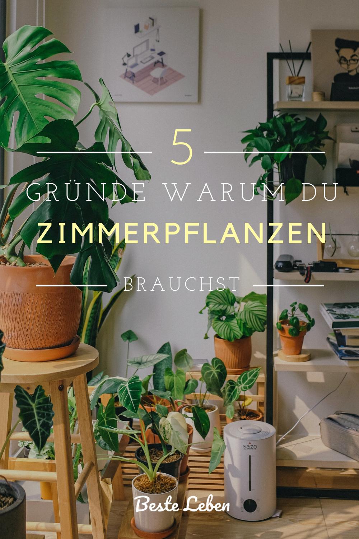 5 Grunde Warum Du Zimmerpflanzen Brauchst In 2020 Zimmerpflanzen Schlafzimmer Pflanzen Zimmerpflanzen Dekor
