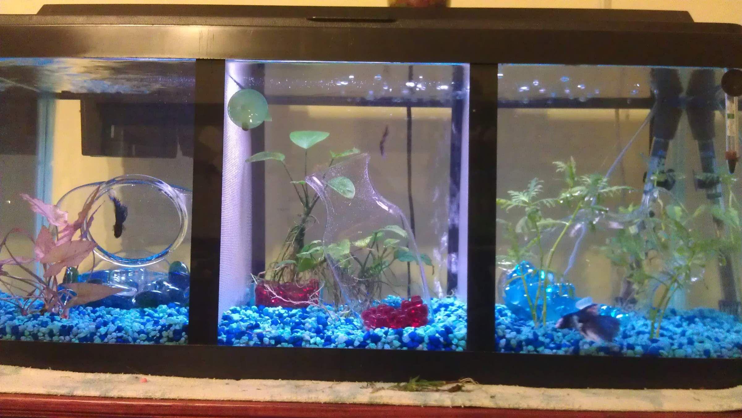 Aquarium ideas · male betta tanks with iders - Google zoeken & male betta tanks with iders - Google zoeken | My Pets | Pinterest ...