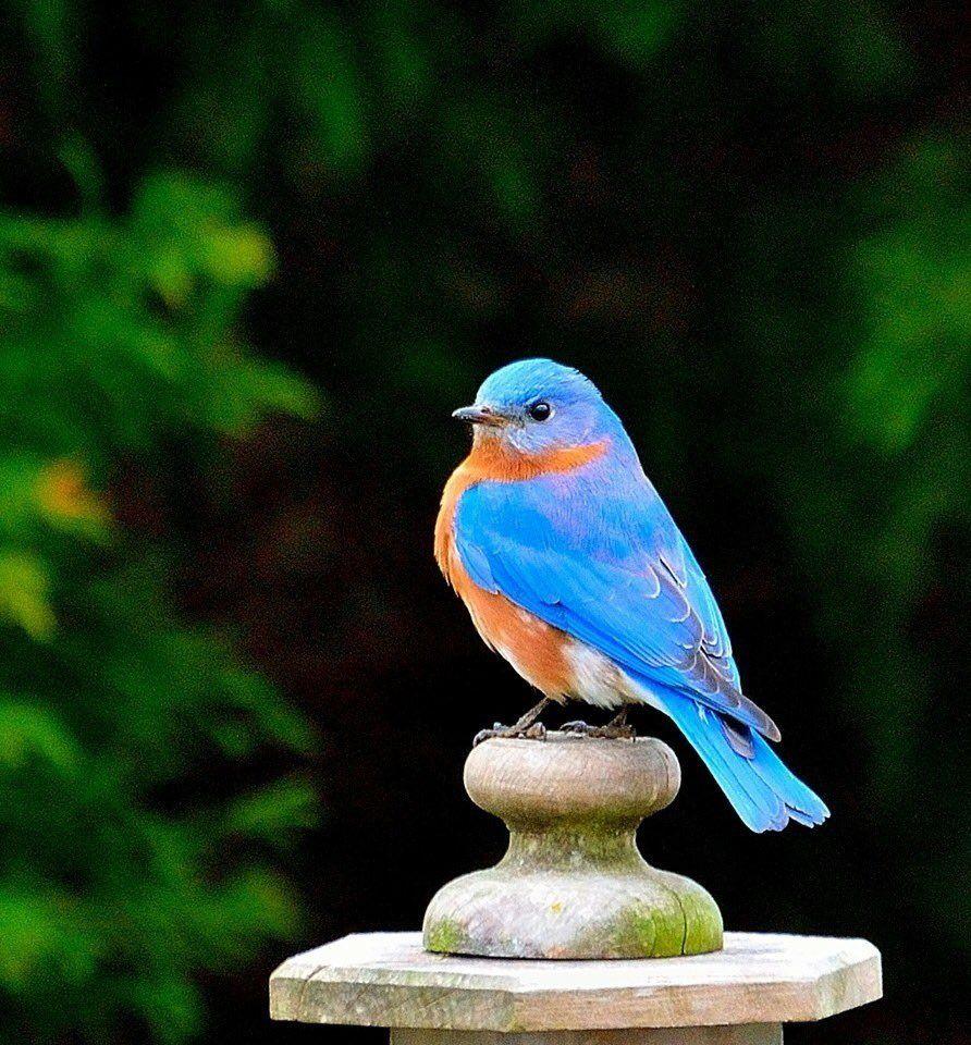 7 twitter blue birds pinterest twitter bird and beautiful