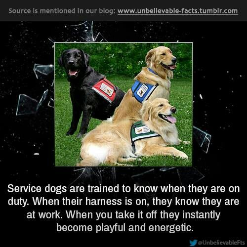 If A Service Dog Has A Vest On Do Not Try To Pet Her She Is