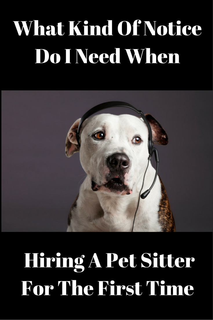 What Kind Of Notice Do I Need When Hiring A Pet Sitter For The First Time Pet Sitters Pet Sitter Business Pets