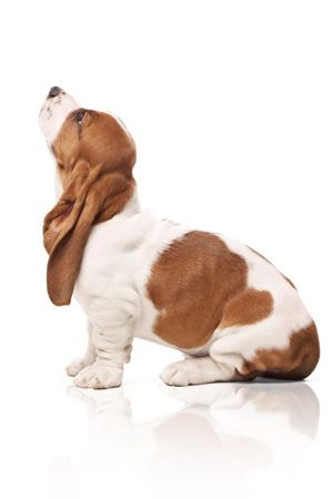 Hush Puppies Logo Google Search With Images Basset Dog
