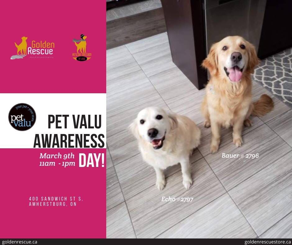 Golden Rescue Will Be At Pet Valu Amherstburg On Saturday March 9th From 11am 1pm Stop By And Meet International Rescues Bauer 2796 Rescue Dogs Pets Rescue