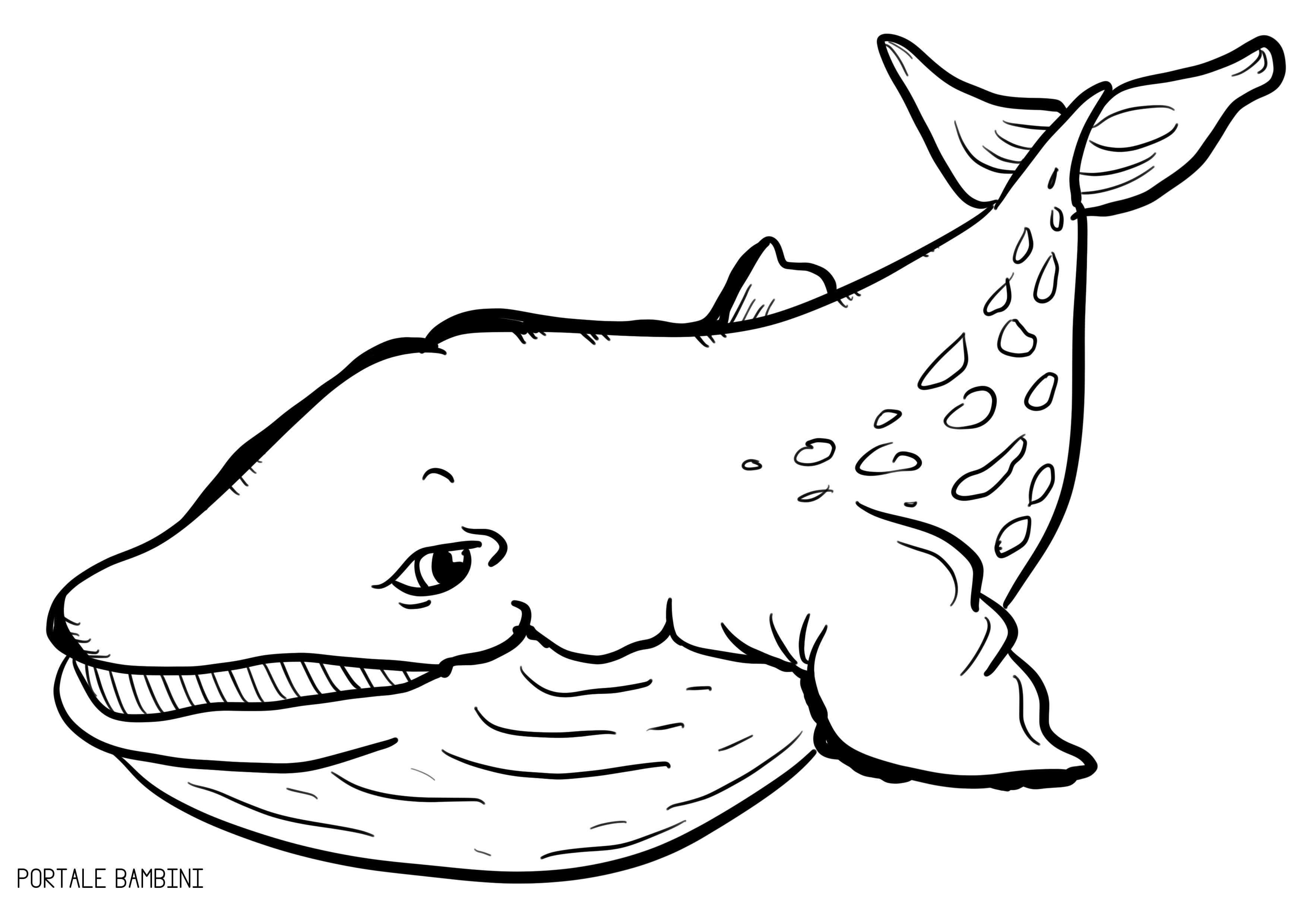 Disegni Di Balene Da Stampare E Colorare Disegni Coloring Pages