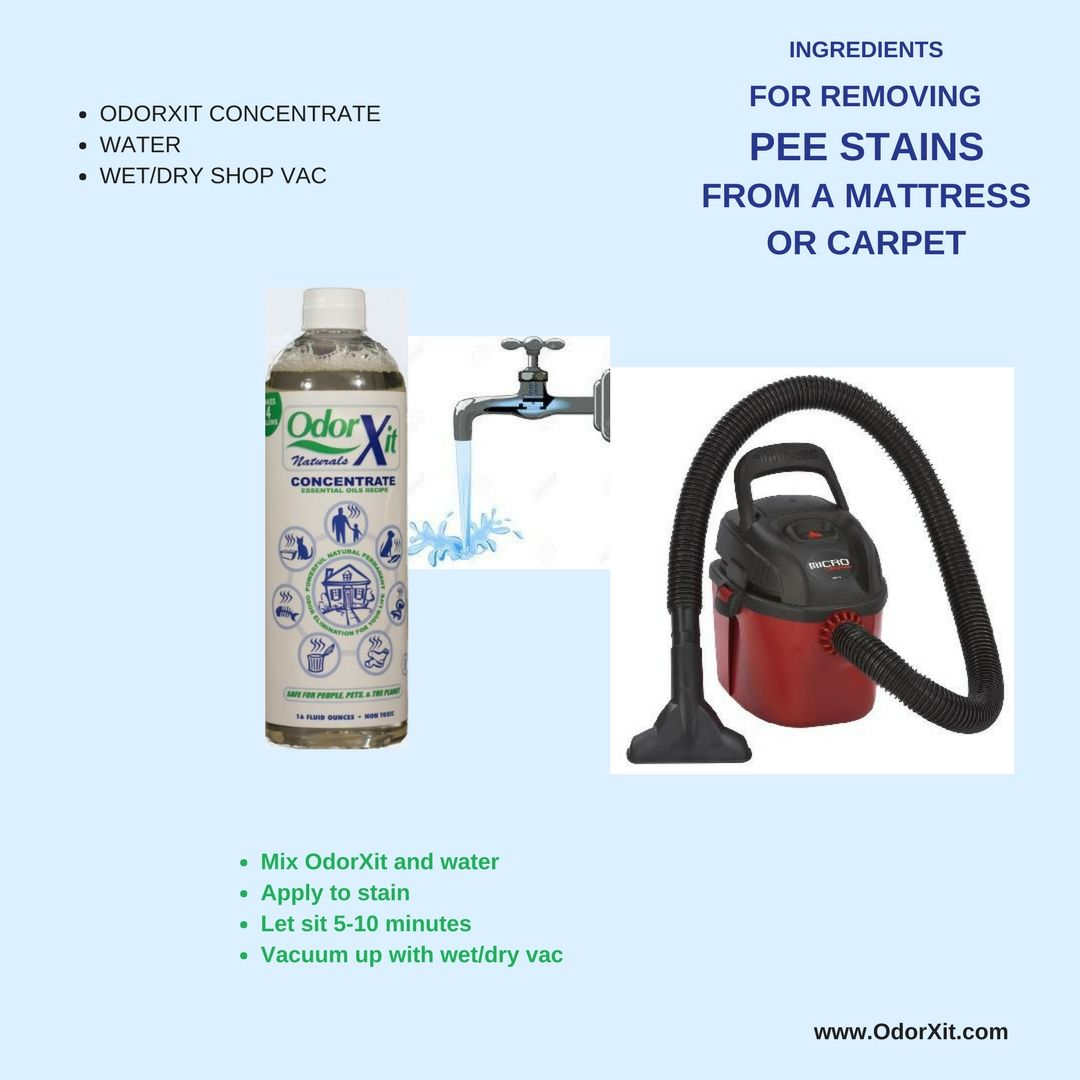 Removing pee stain from mattress or carpet. pee, mattress
