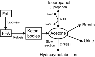 Pin On Ketogenic