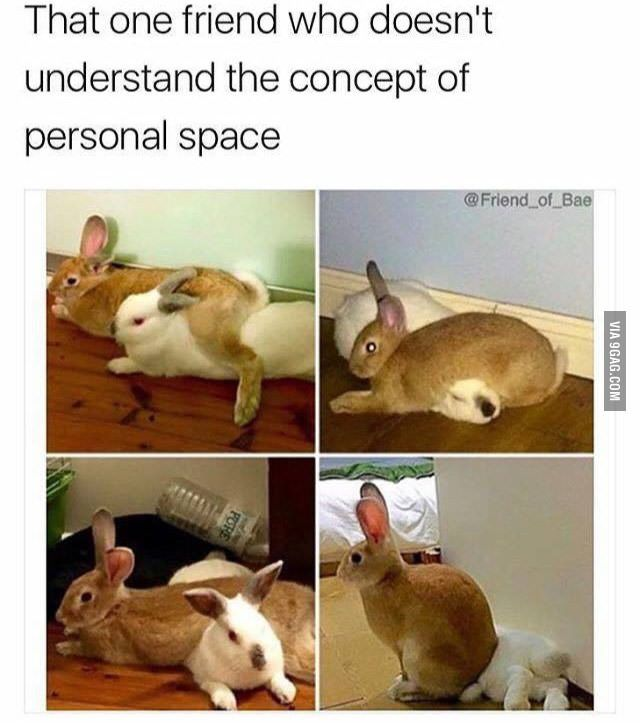 Personal Space Cute Funny Animals Funny Animal Pictures Funny Animals