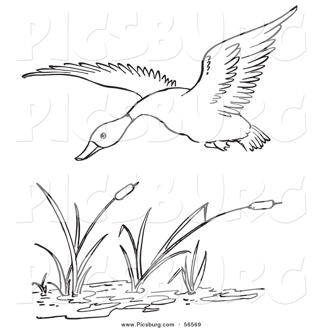 Line Art Duck : Printable black and white art clip of a duck flying