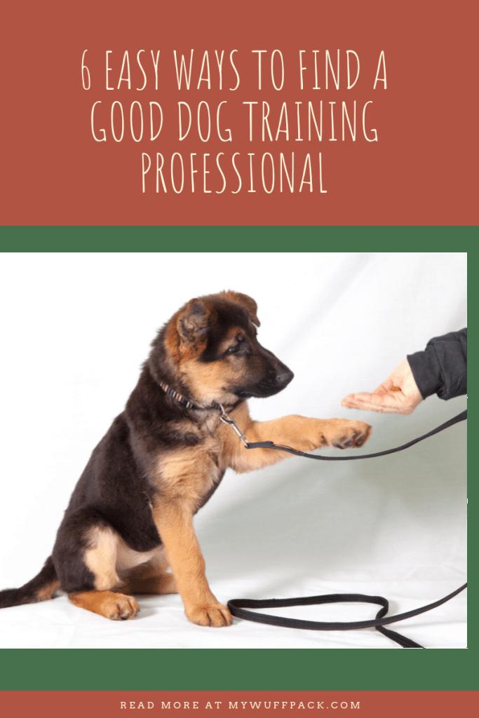 Winning Philosophy For Dog Training