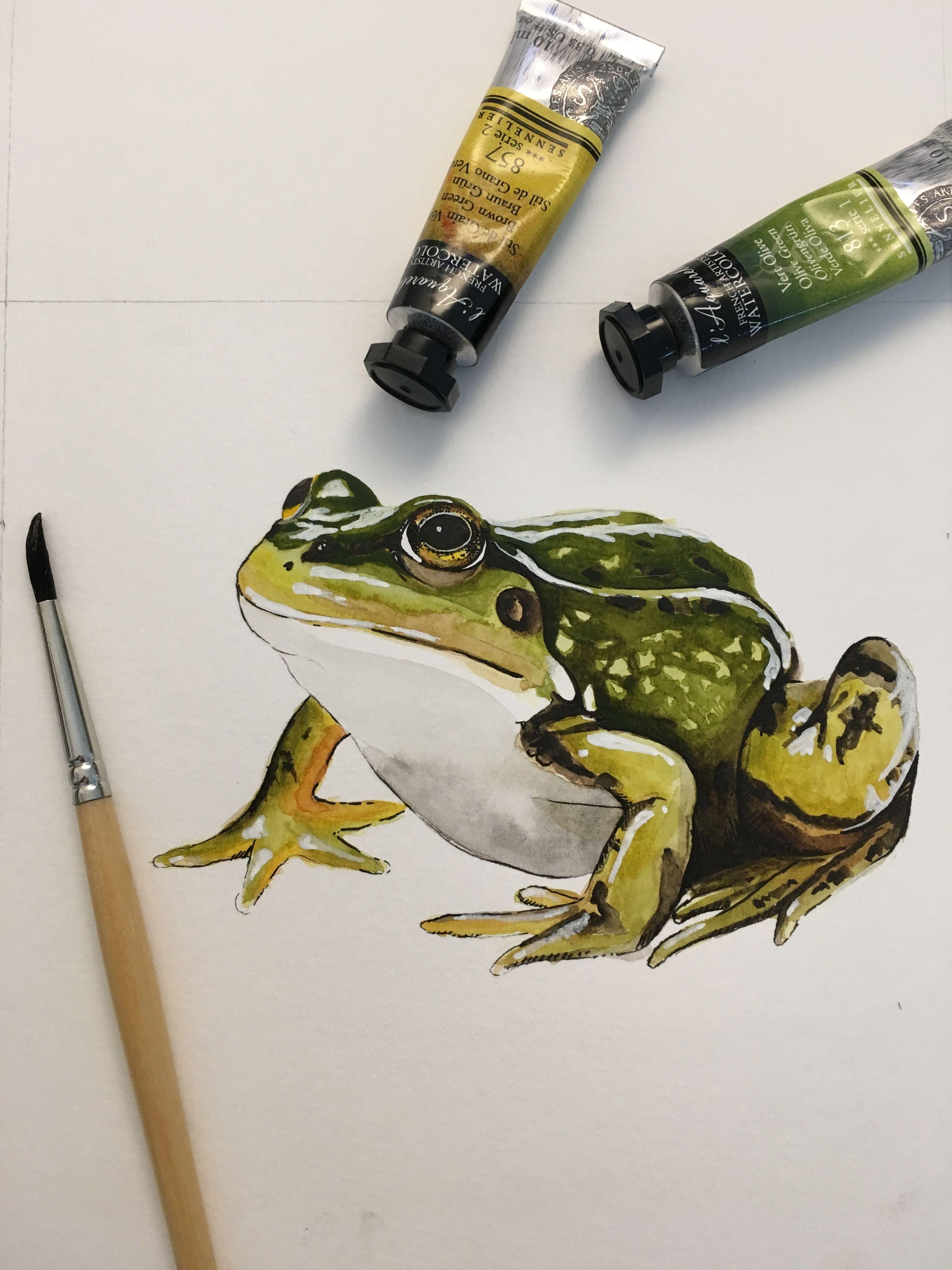 Pin By Kensey On Art Frog Illustration Watercolor Art Art