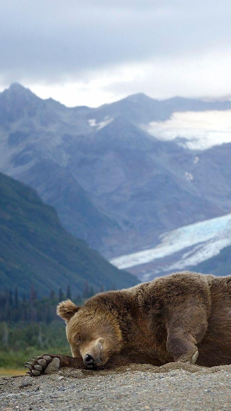 Catching Zzzz\'s... Alaska Scenery - By Olav Thokle | Animales ...