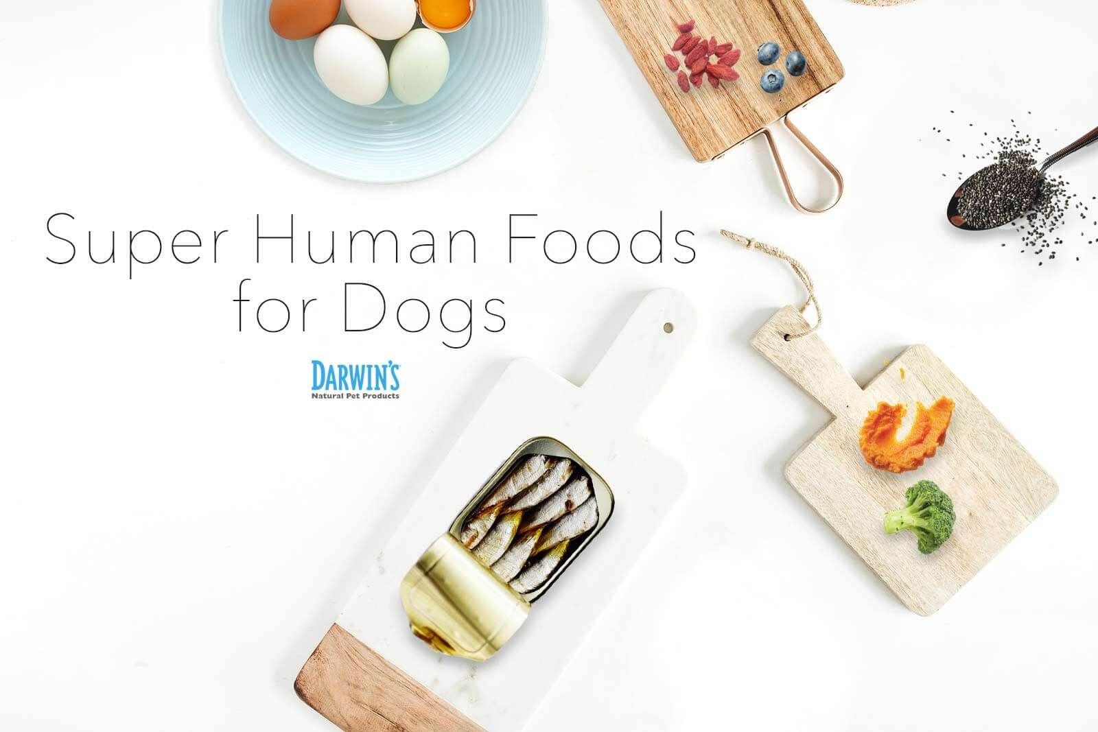 7 human superfoods to share with your dog human food for