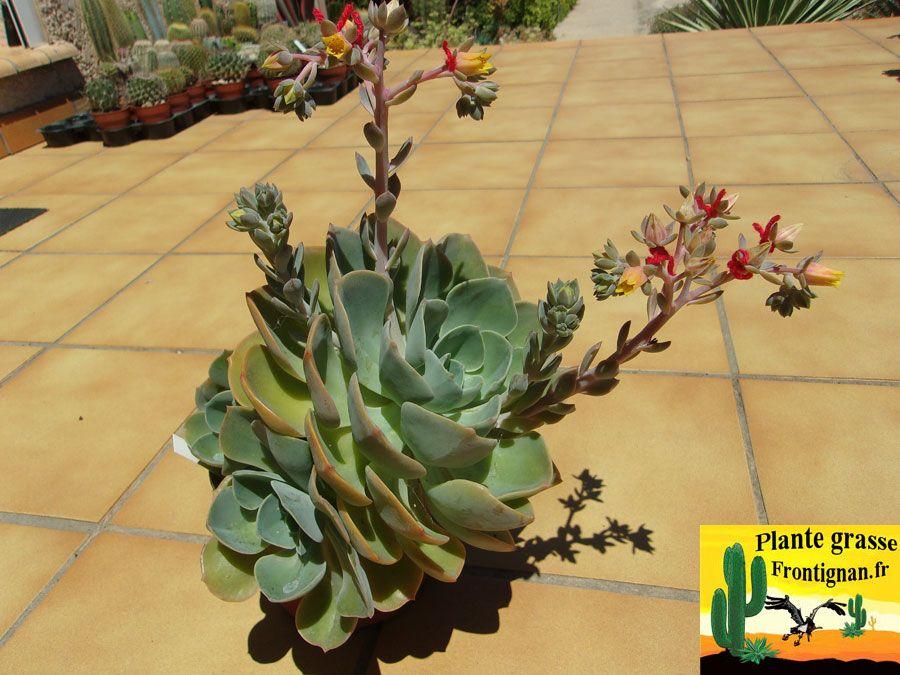 Flo Botanical Workshop Terrariums Planet Family Reunited