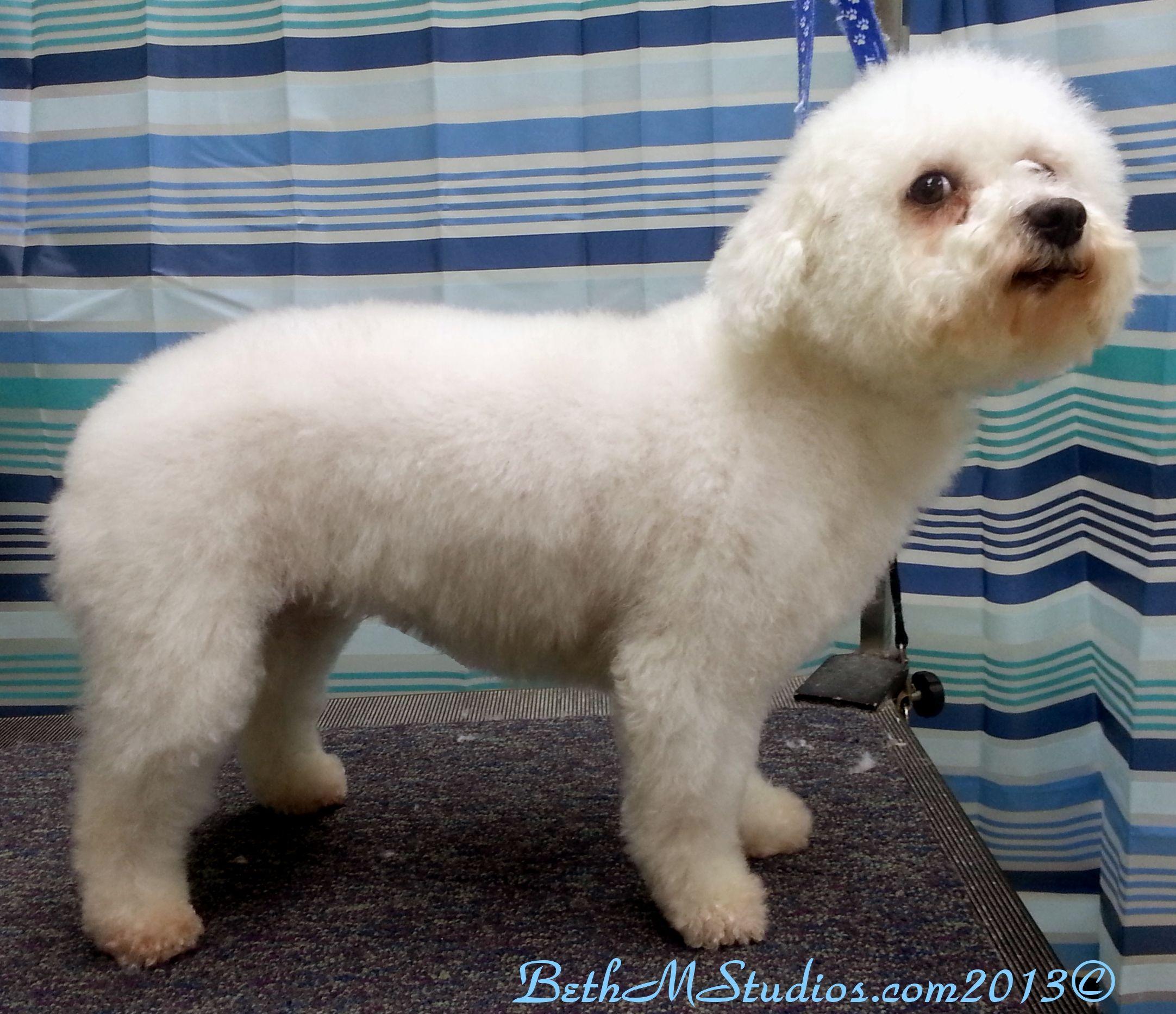Bella-(Bichon/Poodle) After a Breed Style http://www.gooddogsspaandstudio.com