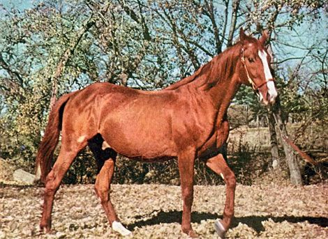 A Rare Color Photo Of Triple Crown Winner Omaha Triple Crown Horses Thoroughbred Horse Racing