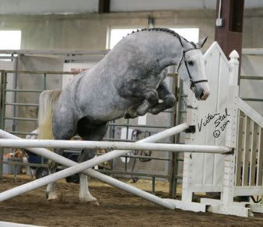 horse jumping with no rider caballos Pinterest Horse - free horse bill of sale