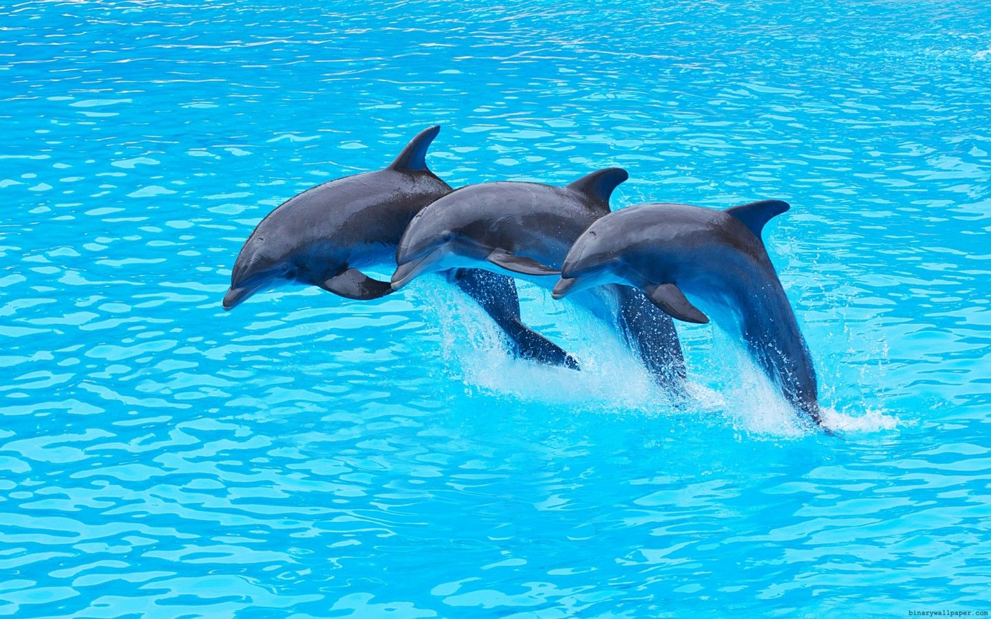 DolphinsWallpaper.jpg (1440×900) Dolphin images