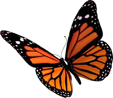 Resultats Google Recherche D Images Correspondant A Http Www Vlaanderengroen Be Images Butterfly Png Tatouage Papillon 3d Tatouage Papillon Dessin Papillon