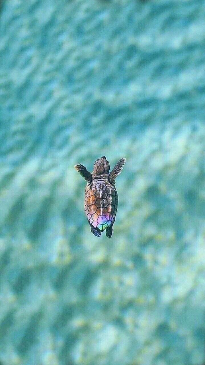 Life S A Beach Cute Turtles Cute Animals Cute Baby Animals