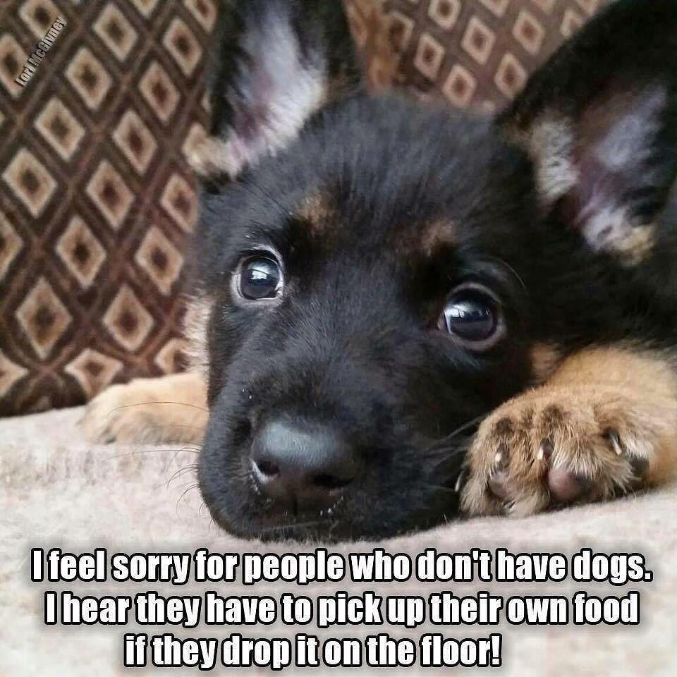 Animal Humor Image By Dany Myers German Shepherd Funny Dogs