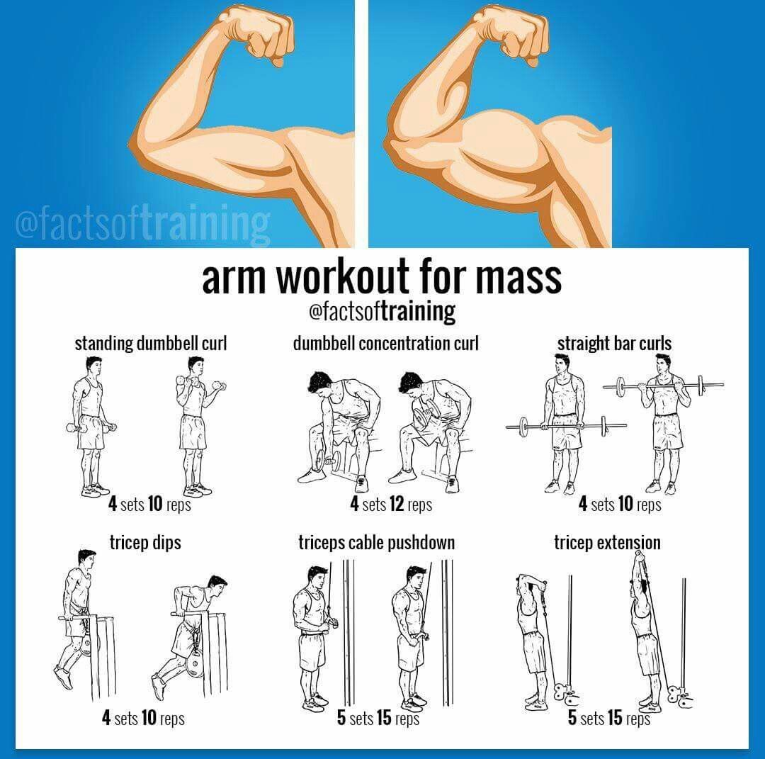 Arm Workout To Build Muscle Mass