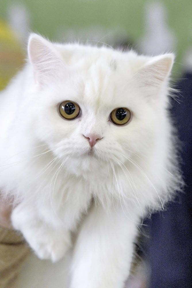 White Cat By Serg Semin On 500px Beautiful Cats White Cat