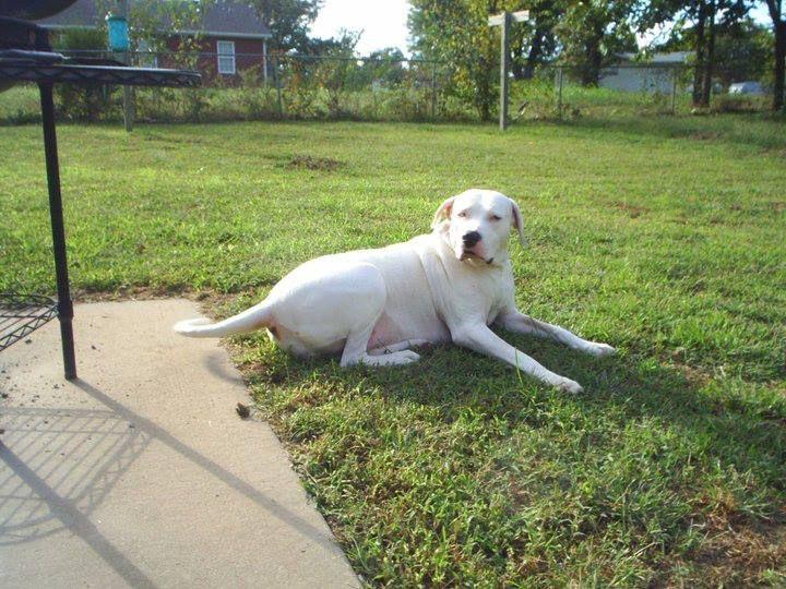 Do You Recoginize This Dog Hanah S A Joplin Mo Tornado Survivor
