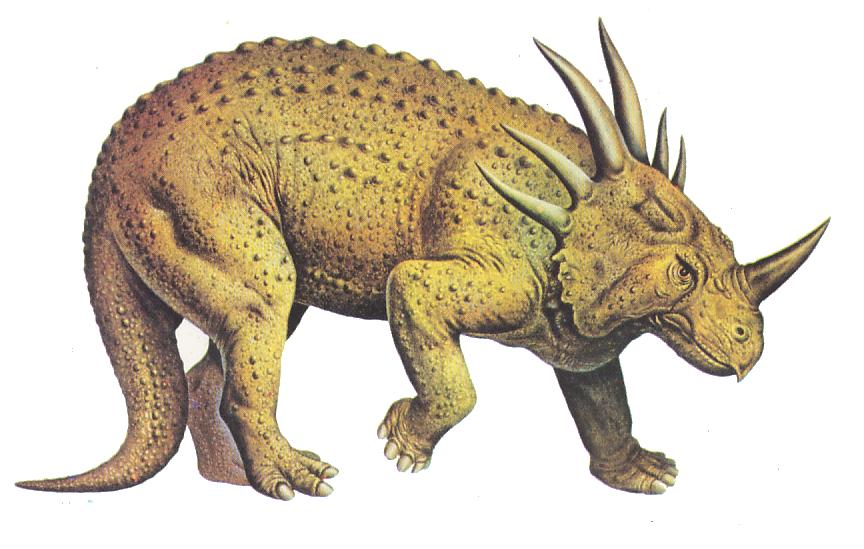 Pin On Fossils Los ornitisquios incluyen una serie de dinosaurios comedores de plantas como los estegosaurios, anquilosauriano, los dinosaurios con cuernos, cresta y picos de pato. pin on fossils