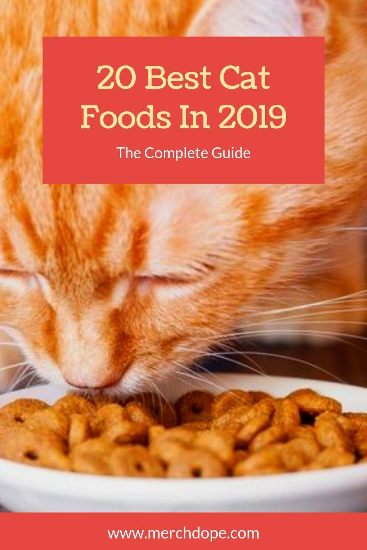 20 best cat foods in 2019 the complete guide merchdope