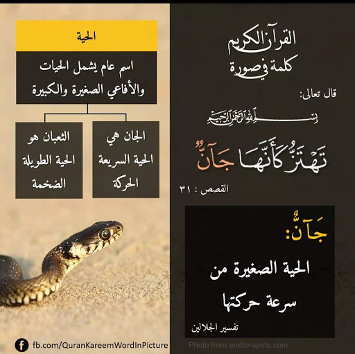 لمسات بيانيه وفوائد ولطائف قرانيه كلمة ج آن In 2021 Quran Verses Holy Quran Islam