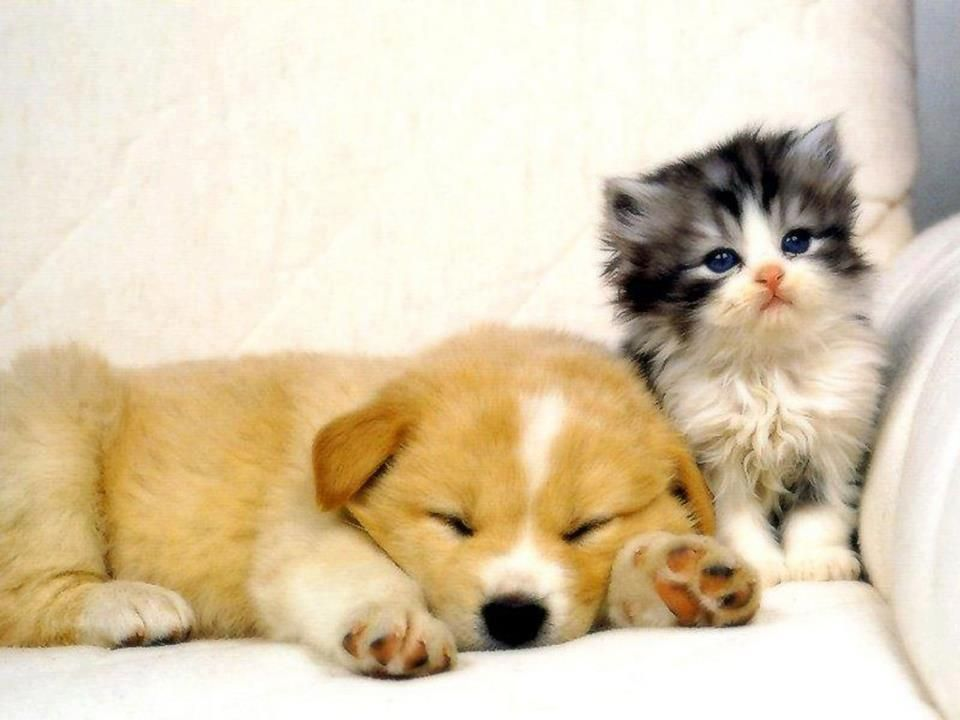 Hond En Poes Cute Puppies And Kittens Kittens And Puppies Cute Animals
