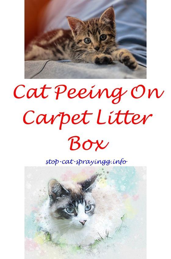 Cat Pee, Cats, Male Cat Spraying