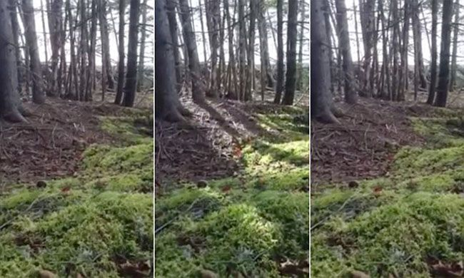 Image result for forest floor breathing video