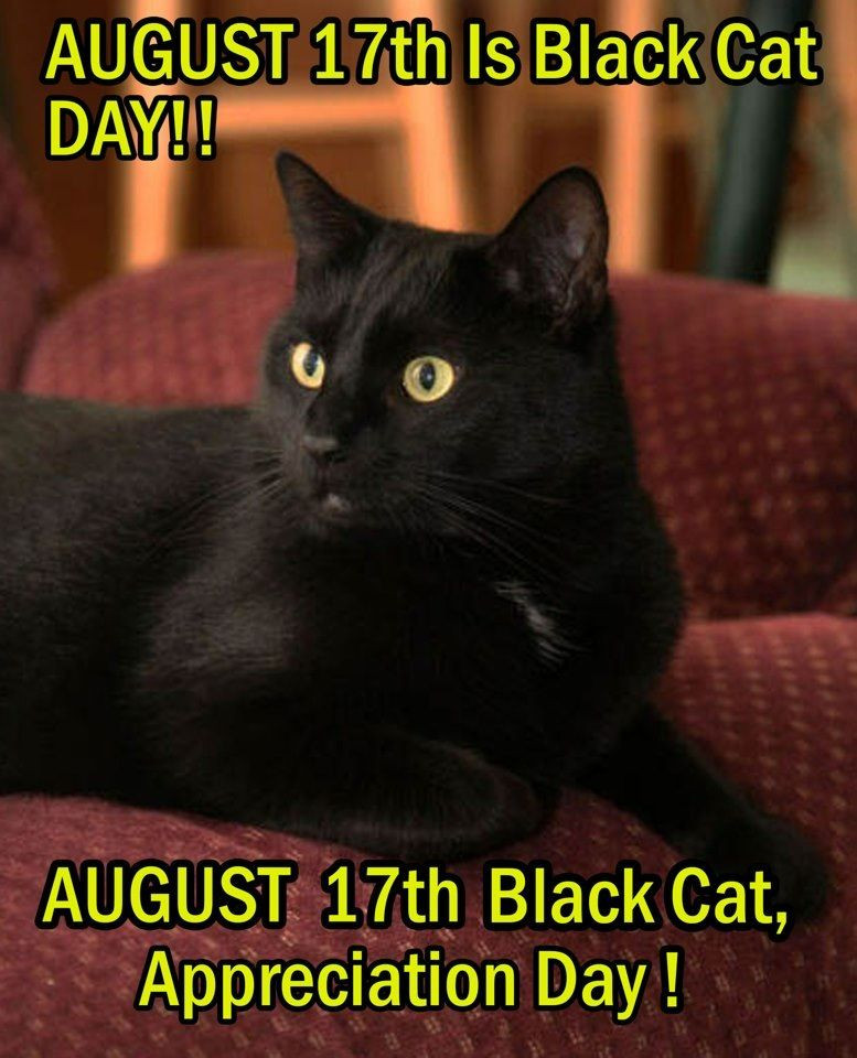Black Cat Appreciation Day Oh Really And How Do You Plan On Celebrating My Appreciation Pray Tell A Ste Black Cat Appreciation Day Black Cat Day Black Cat