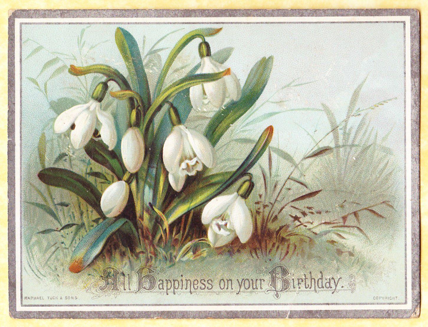 Victorian Card Snowdrop Flowers R Tuck Ebay Flower Artwork Botanical Decor Botanical Art