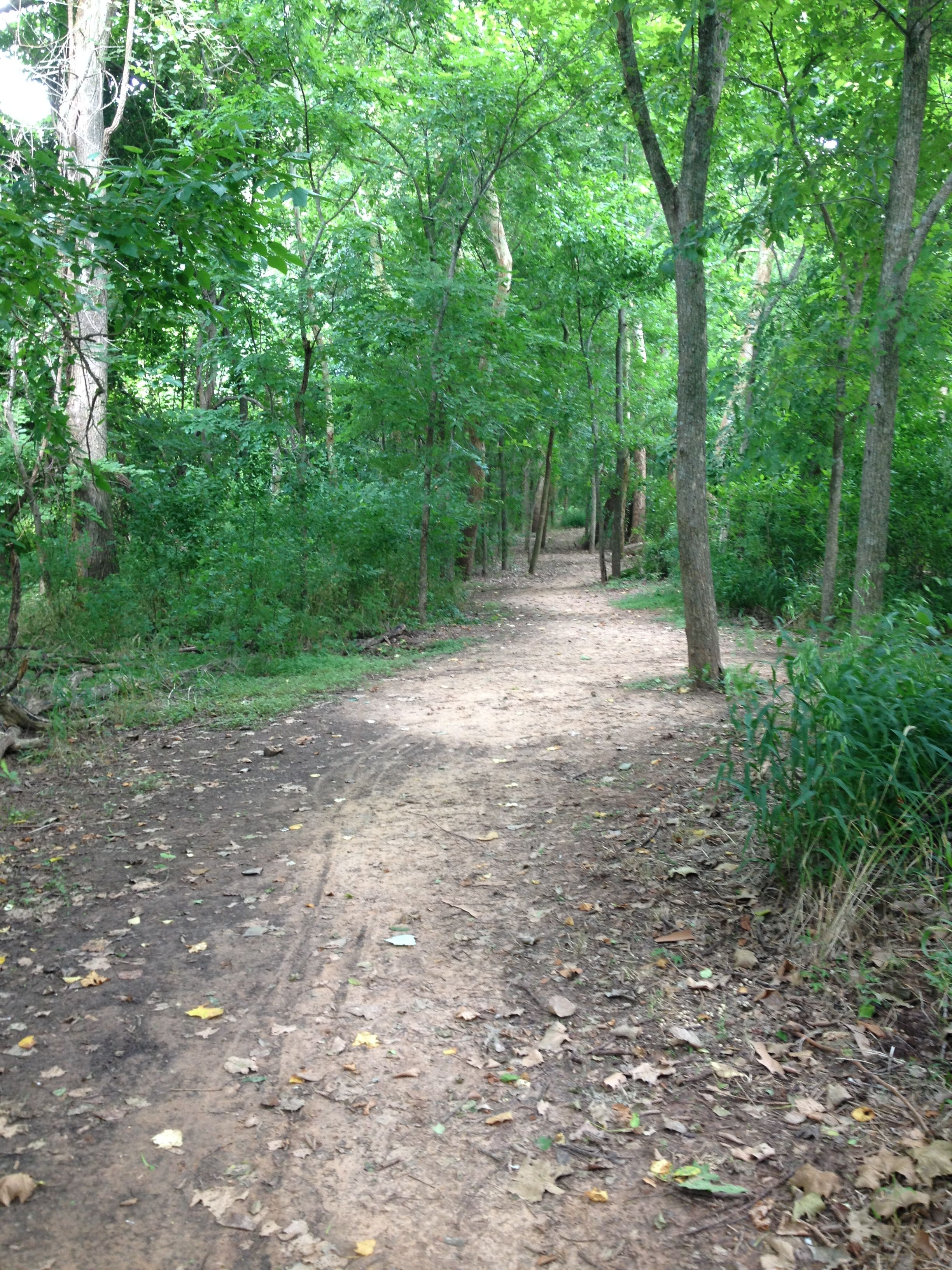 Stephen F Austin State Park, Sealy, TX. Trails are clearly ...