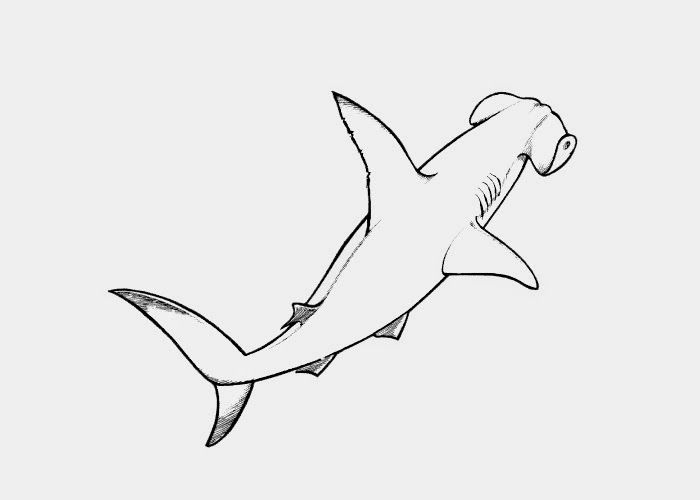 hammerhead shark coloring pages to print free coloring pages and